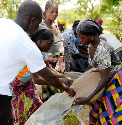 Farmers from The AKÉ Collective bagging up moringa ready to retail